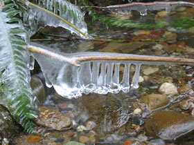 Icy Branch Along Coal Creek