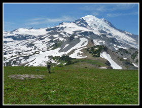 Mt. Rainier And Meadows Above Pnahandle Gap