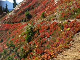 Fall Color On Mt. David